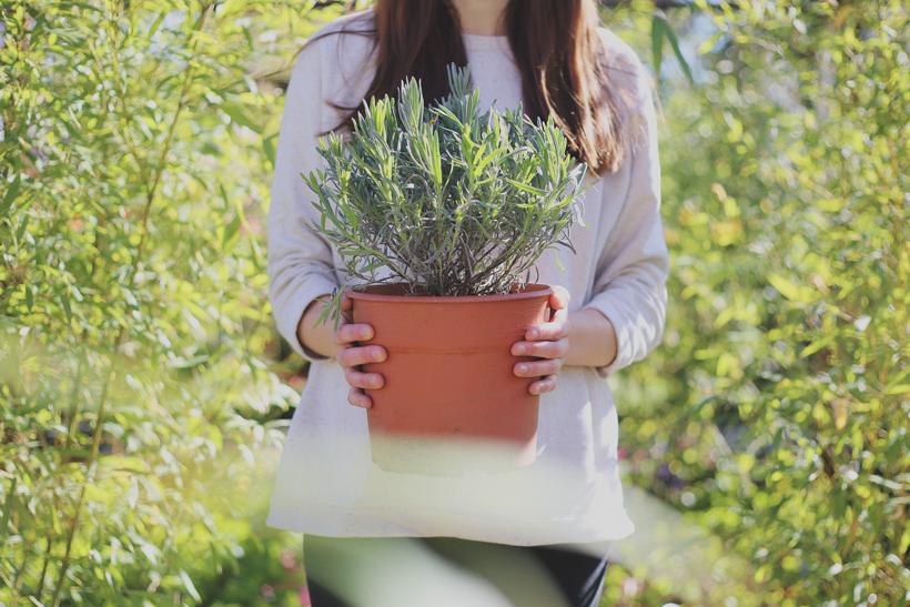 revistajaleo_jardinentucasa2