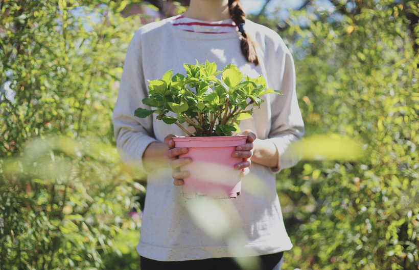 revistajaleo_jardinentucasa7