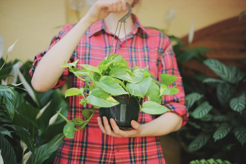 revistajaleo_jardinentucasa4