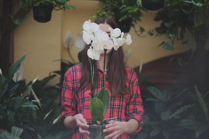 revistajaleo_jardinentucasa8