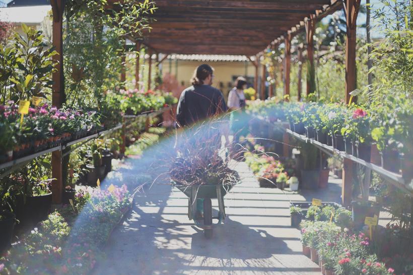 revistajaleo_jardinentucasa10